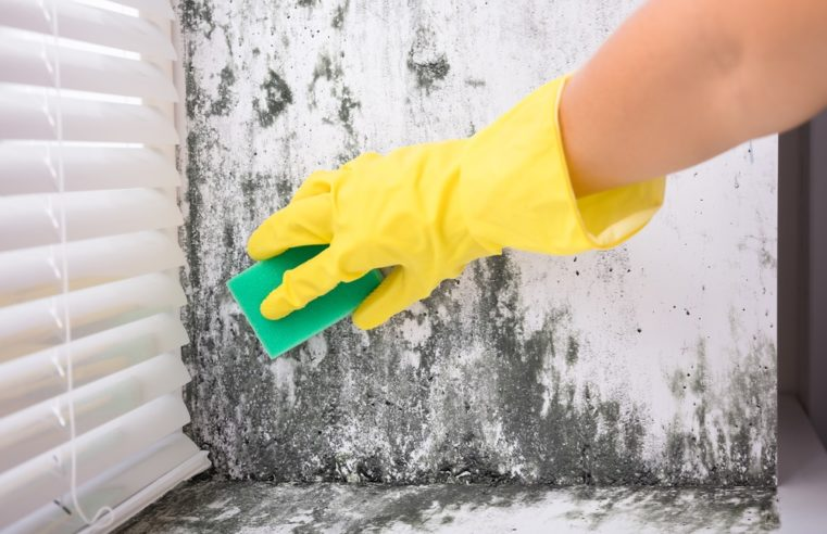 Best Place To Get Mold Removal Service For You Home: Mississauga Mold Removal