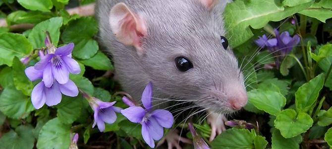 The Hidden Secrets regarding Pest Control Services