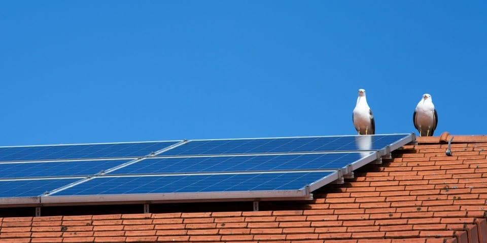 Common Solar Panel Problems